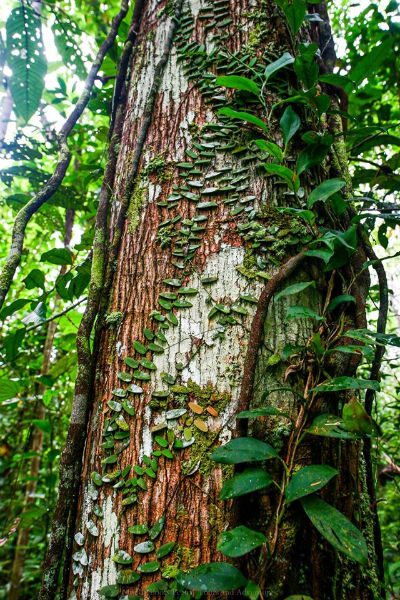 Loreto plants with muddyboots peru biotope one - Flowers that grow on tree trunks ...