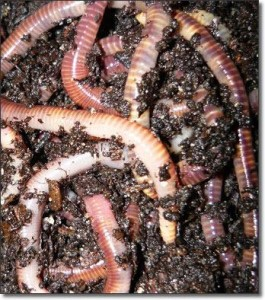 teetatwormfarm