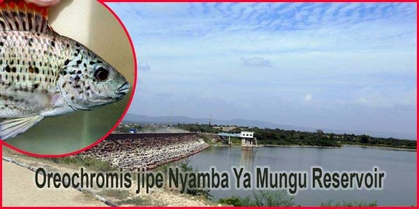 Nyamba-Ya-Mungu-header-image