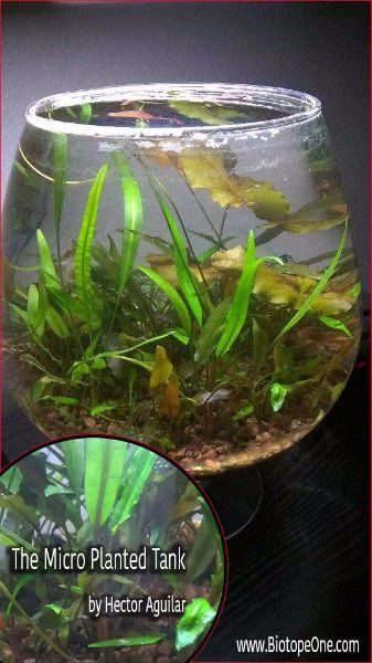 Micro planted tank biotope one for Micro fish tank