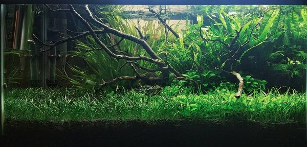 Lot Decoration Aquarium