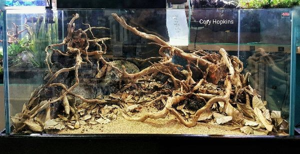 When Initially Filling An Aquascape, I Normally Use An Airline Hose To Fill  It Very Slowly. Also Lying Paper Towels Over Your Scape Before Flooding  Will ...