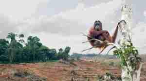 biosprit-subventionen-indonesien