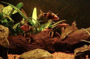 Sri Lanka Aquarium