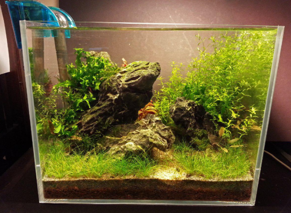 low tech and low cost planted tank biotope one
