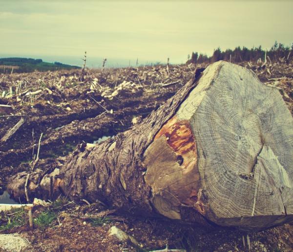 Deforestation Loss