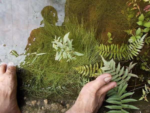 Here's How Plant Hunting Can Help Your Design