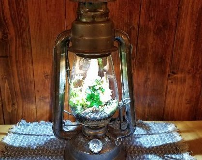 Terrarium From an Old Fashioned Lantern
