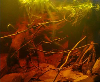 Blackwater Rio Negro Biotope - Benjamin Weidner
