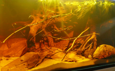 Blackwater biotope aquarium - Photo: Benjamin Weidner