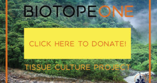 Donate a few dollars to the plant library tissue culture project.